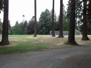 ball field trees