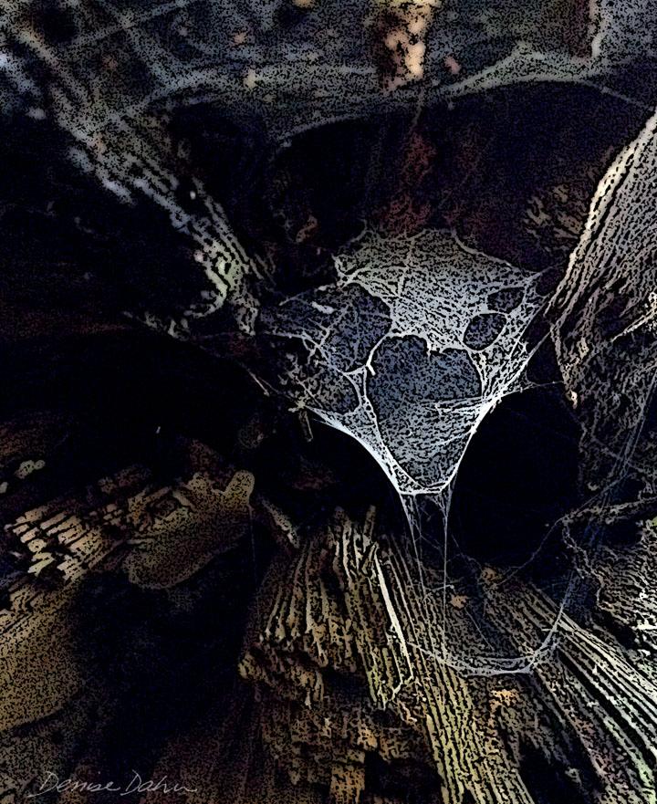 DDahnSpiderweb4