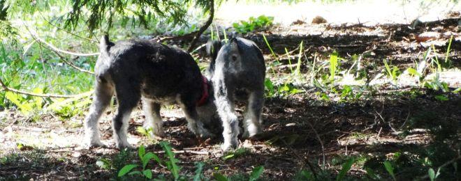 offleash dog 3