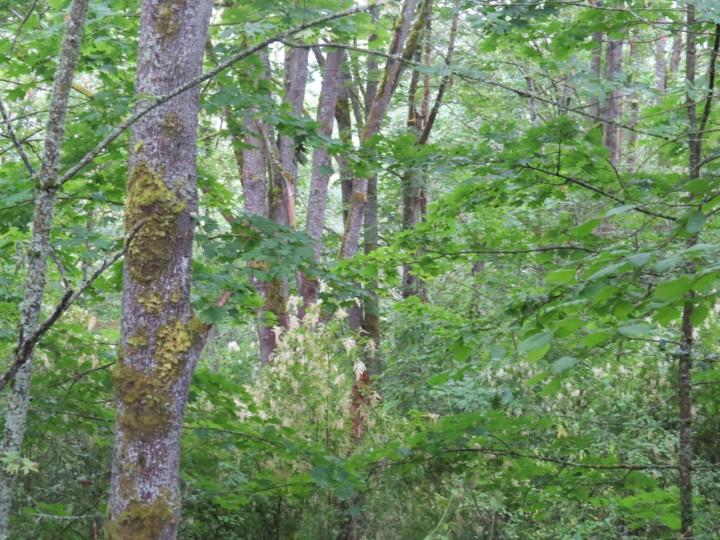 Newbold cheasty forest June 2016