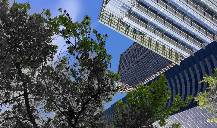 Diminishing tree canopy in the city